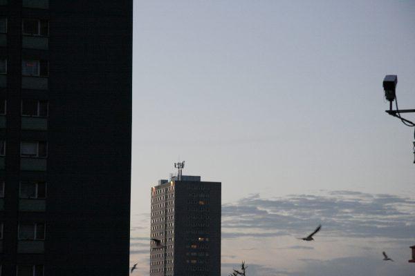 Birds & CCTV